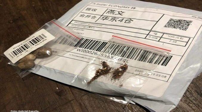 China sementes